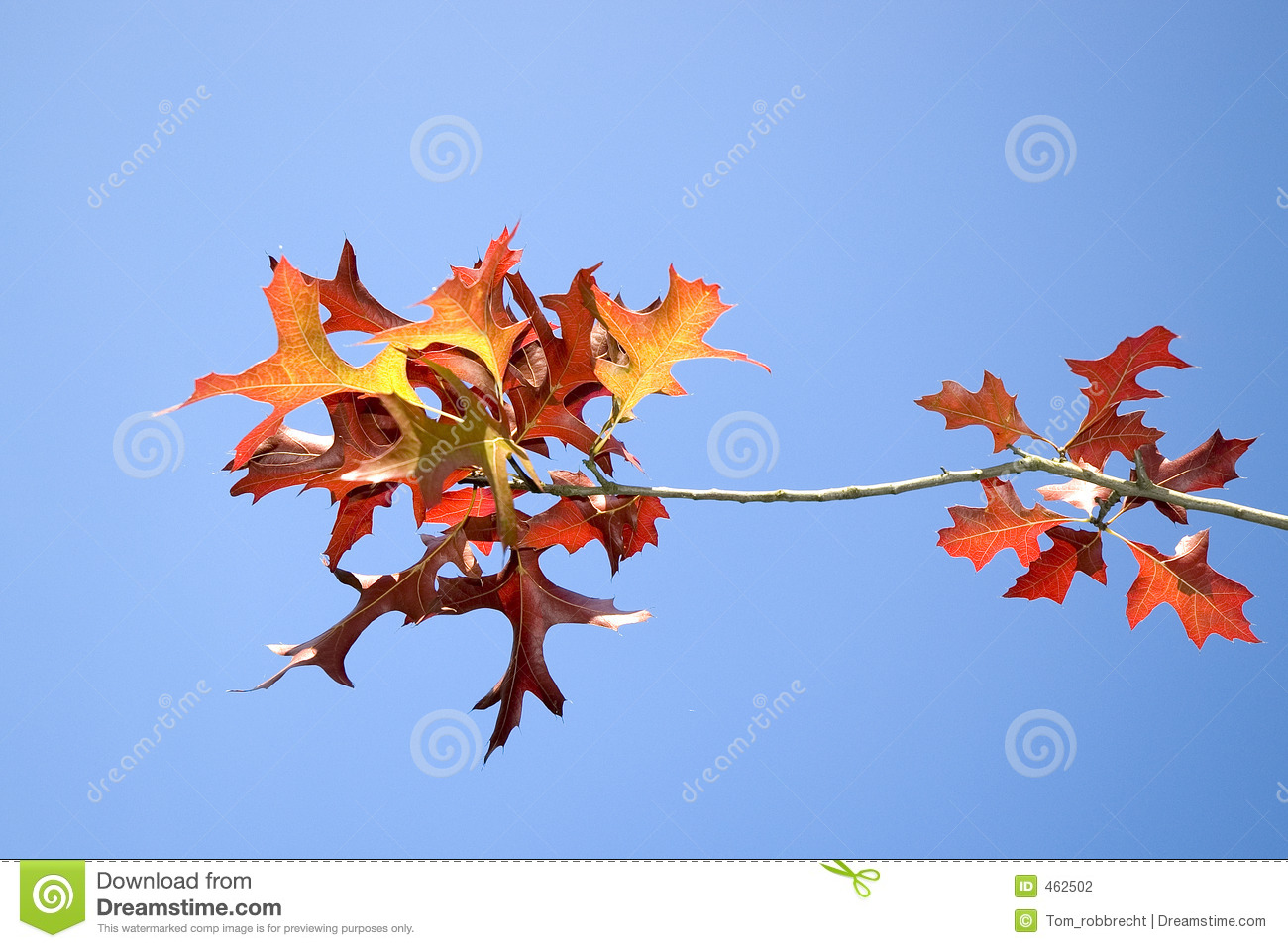 Download Autumn 1 stock photo. Image of blue, leaves, autumn, leaf - 462502