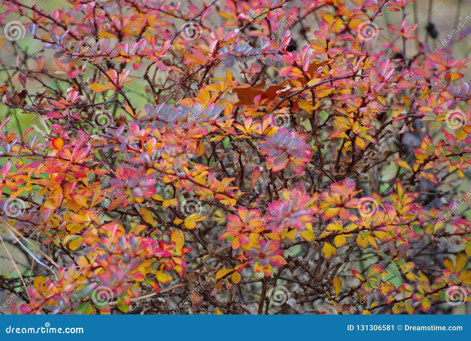 Autumn Abstract a coloré l art