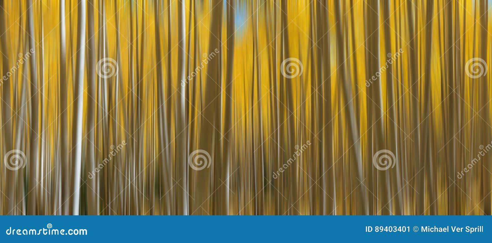 Autumn Aspen Trees Abstract Panorama