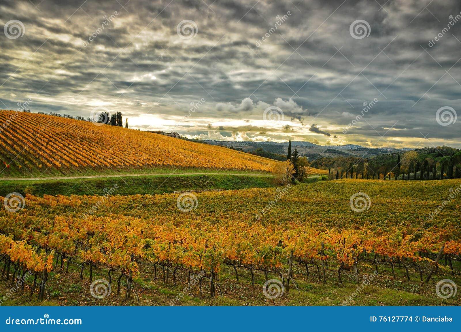 Autumn Atmosphere i en Wineyards i Tuscany, Chianti, Italien
