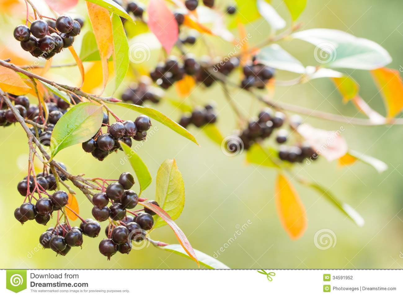 Autumn background with berries