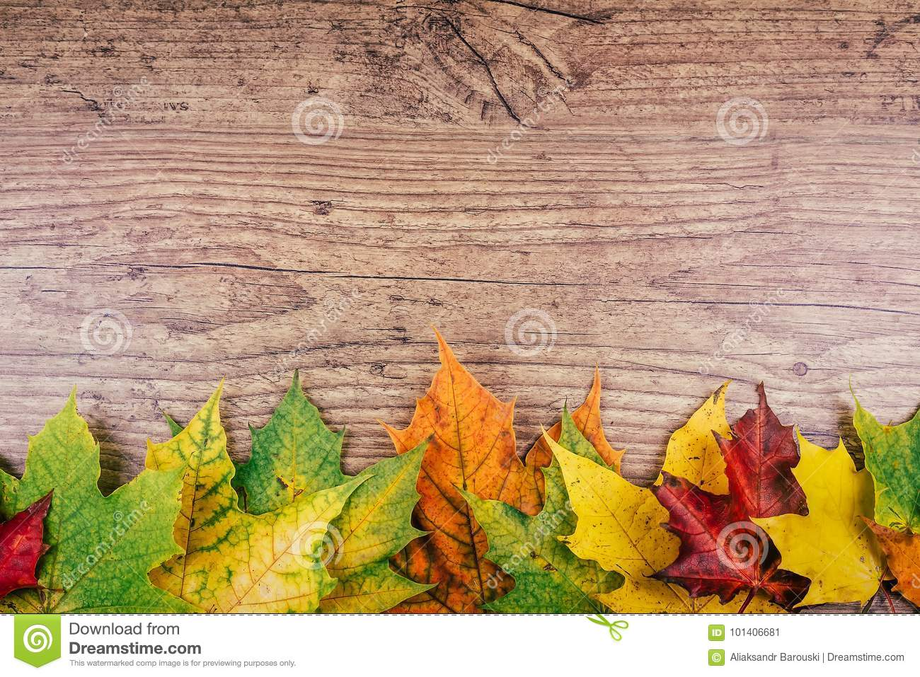 Autumn Background With Colorful Fall Maple Leaves On