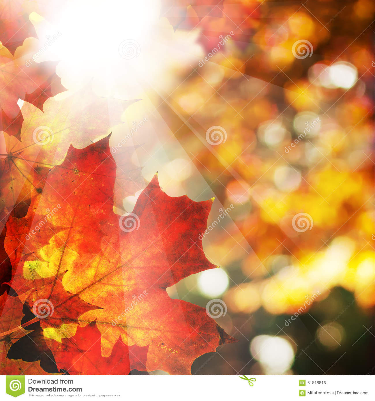 Autumn Background With Maple Leaves. Abstract Fall Border