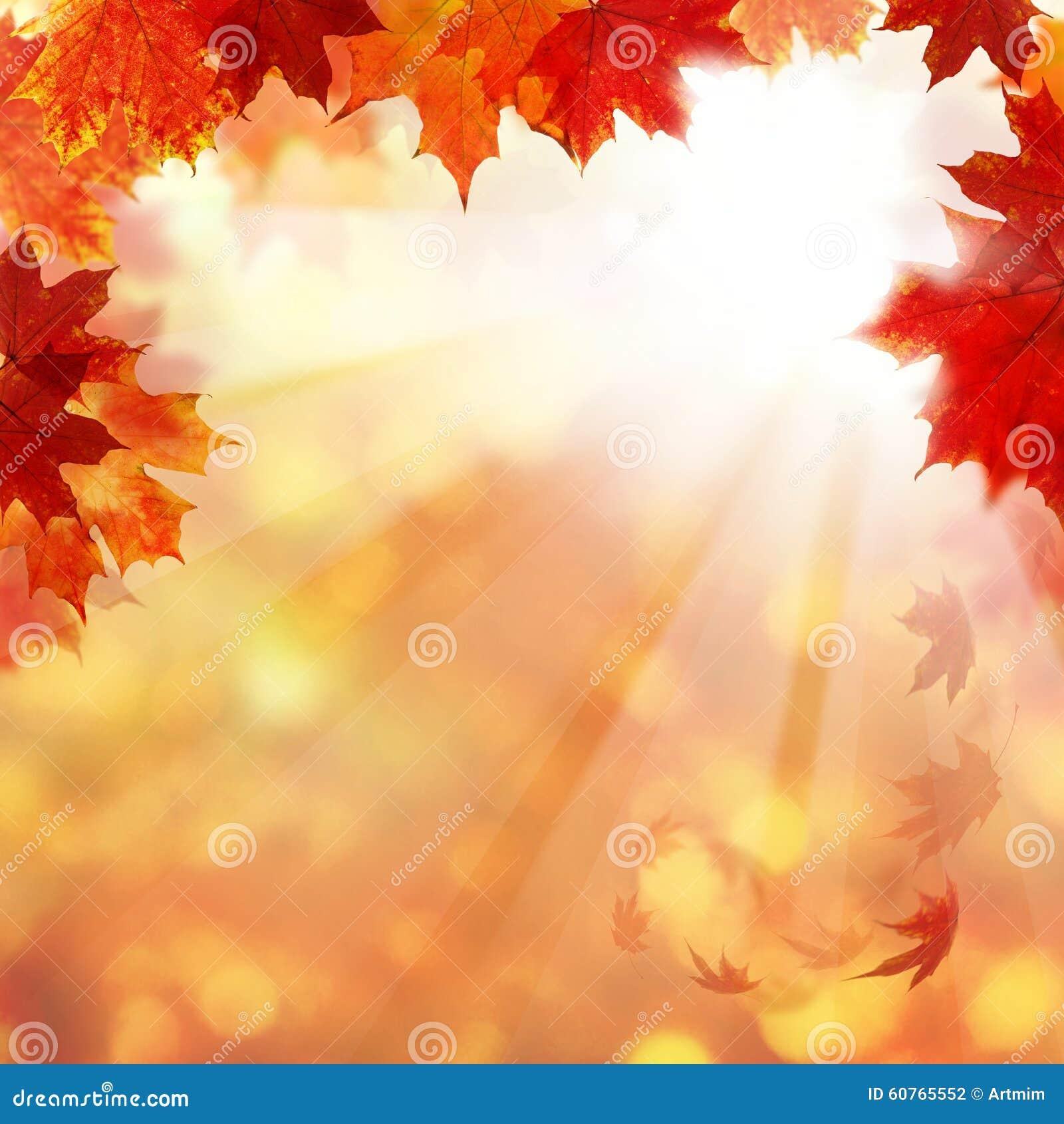 Autumn Background met Esdoornbladeren en Zon Ligth