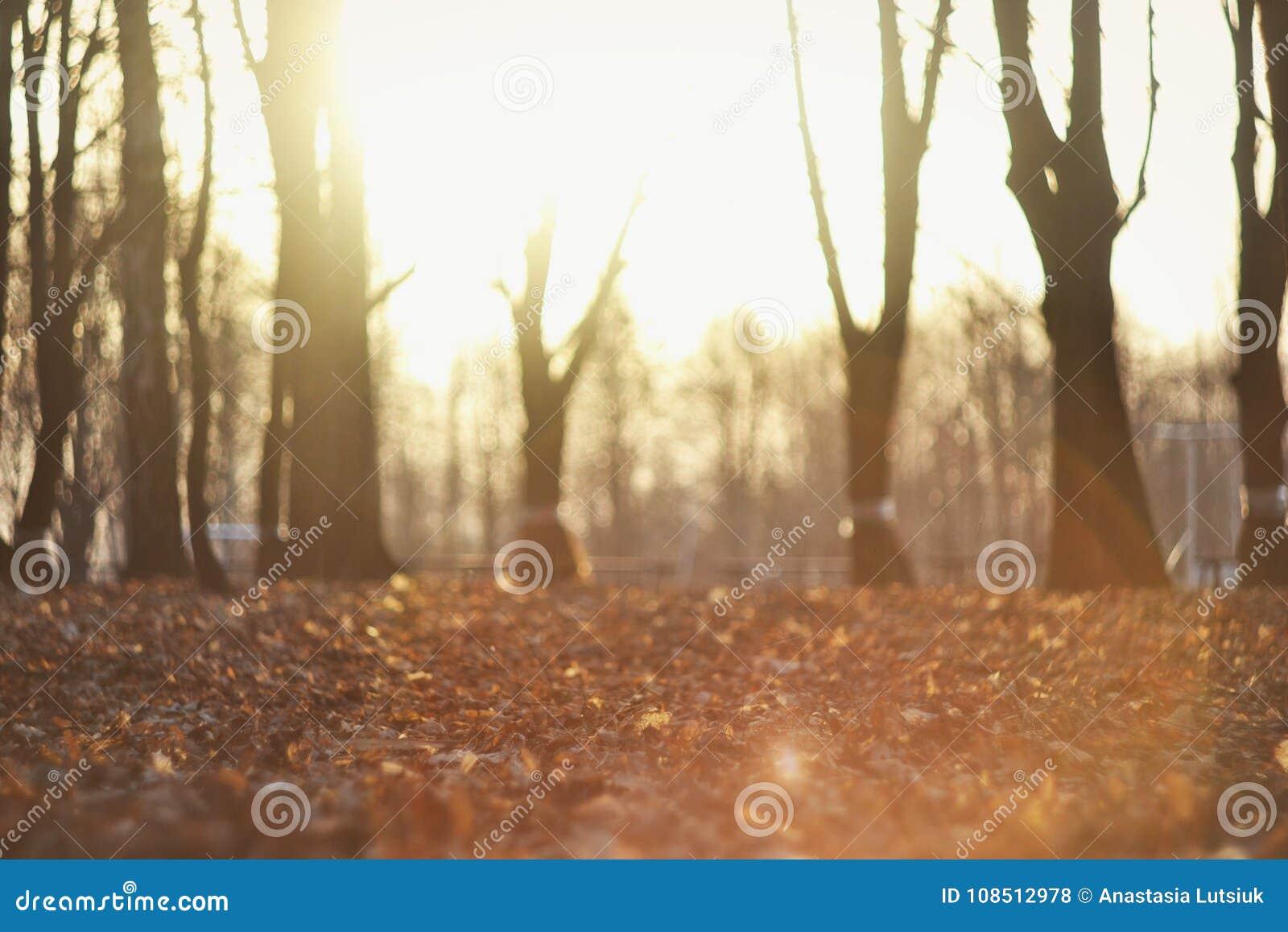 Autumn Background With Sunshine bonito