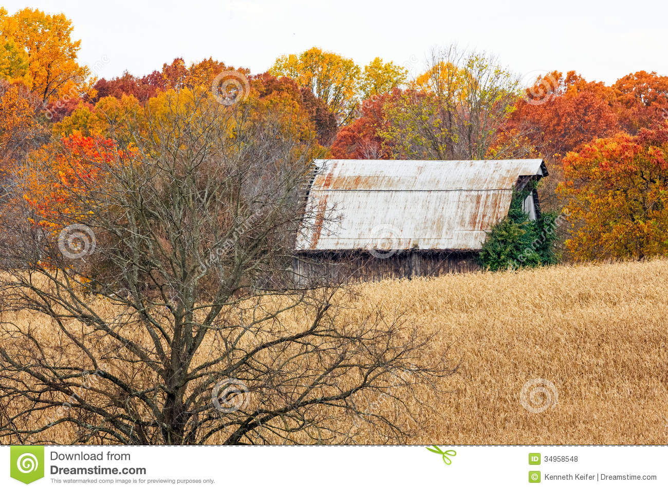Autumn Barn And Tree In Cornfield Stock Photo Image