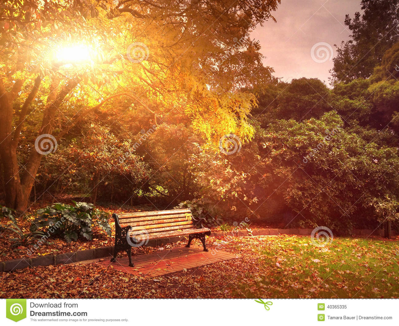 Download Autumn bench in park stock image. Image of warm, sunlight - 40365335