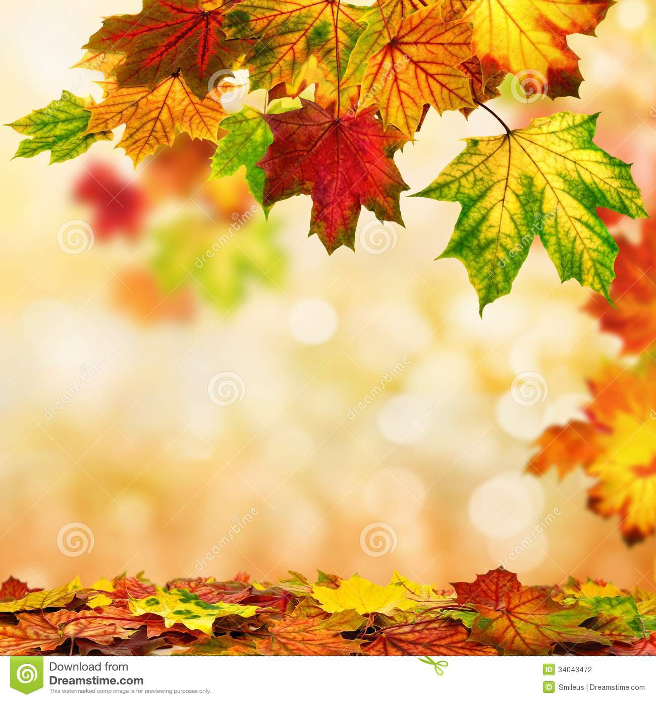autumn bokeh background bordered with leaves stock