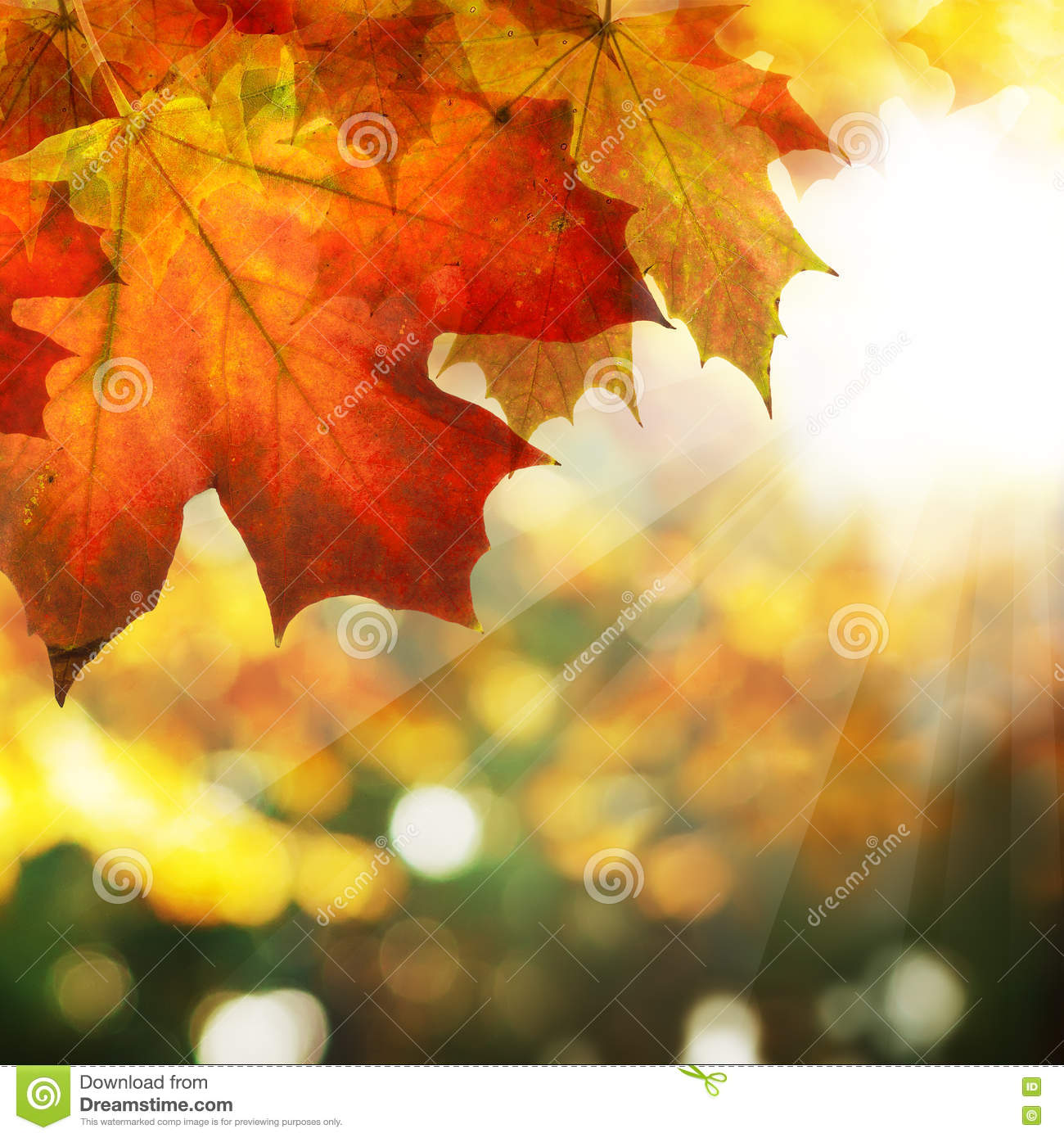 Autumn Border Of Maple Leaves On Abstract Bokeh Background
