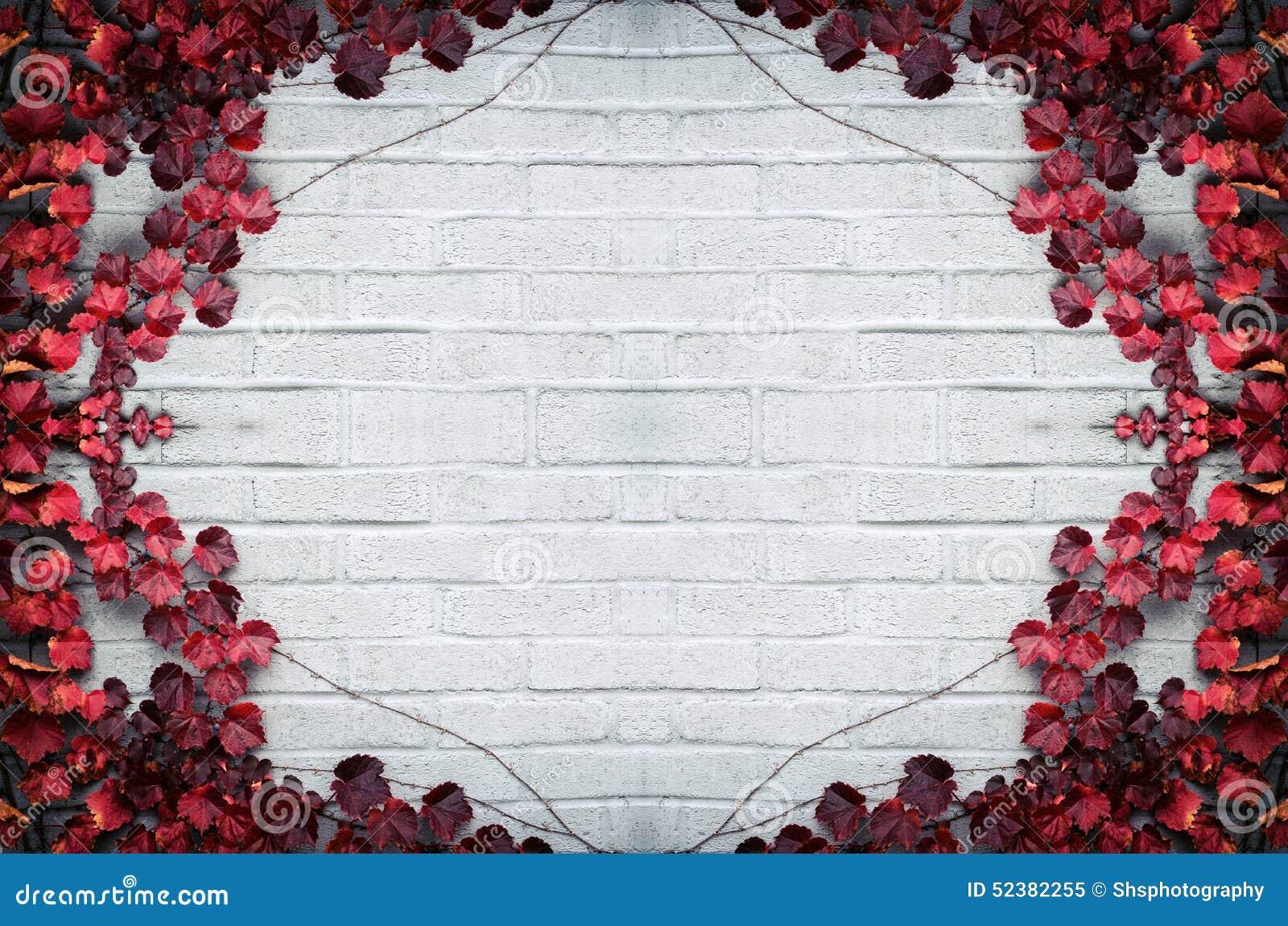 Autumn Border - rote Weinrebe-Blätter