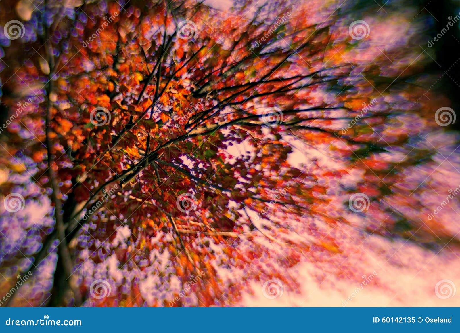 Autumn Burst av färg