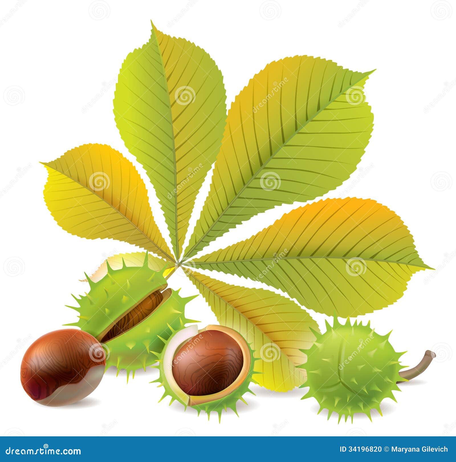 Autumn Chestnuts Stock...