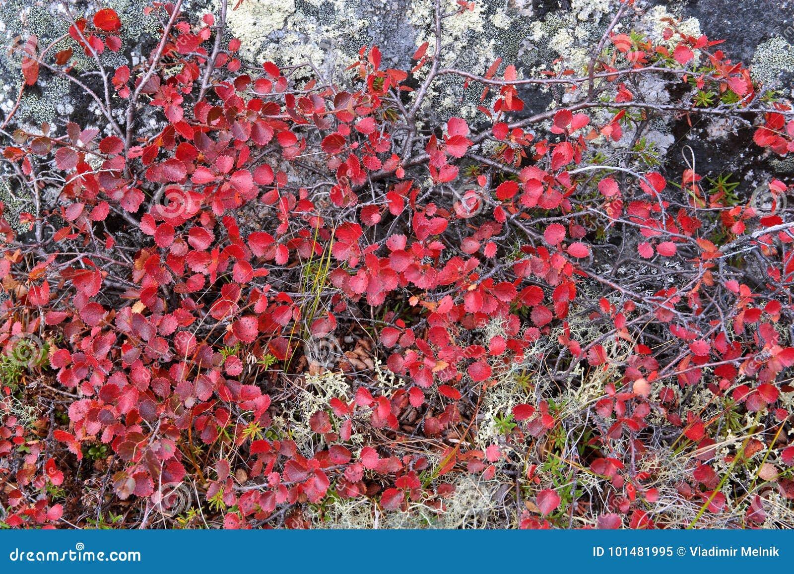 Autumn color palette in tundr