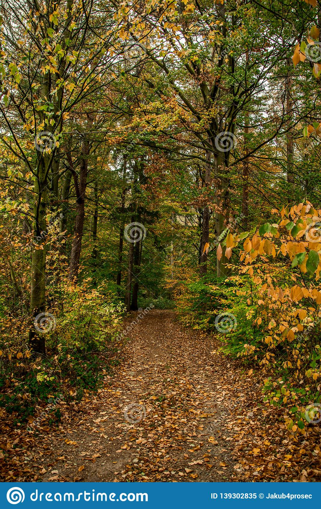 Autumn colored forest with path