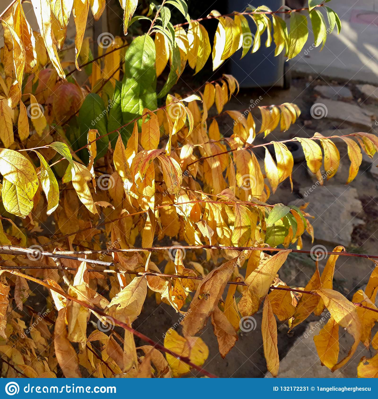 Autumn colored leaves on a sunny day