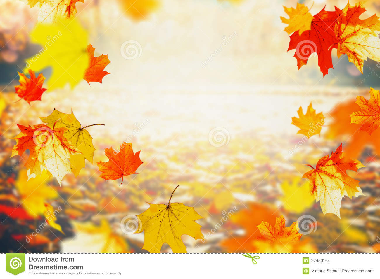 Autumn colorful falling leaves on sunny day, outdoor fall nature background