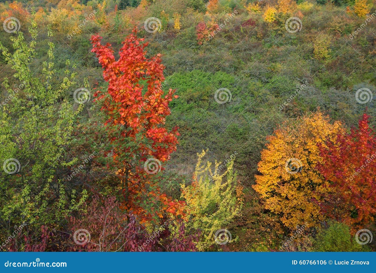 Autumn colorful trees