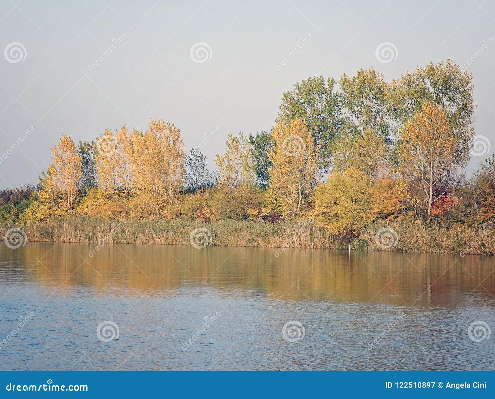 Autumn Colorful Trees Reflecting en rivière