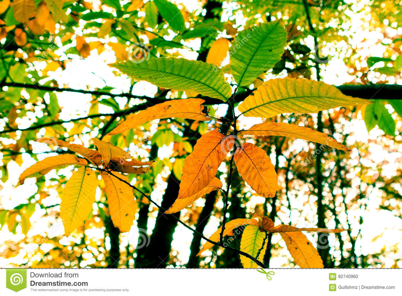 Explore Colors of Summer Leaves - Today\'s Homepage