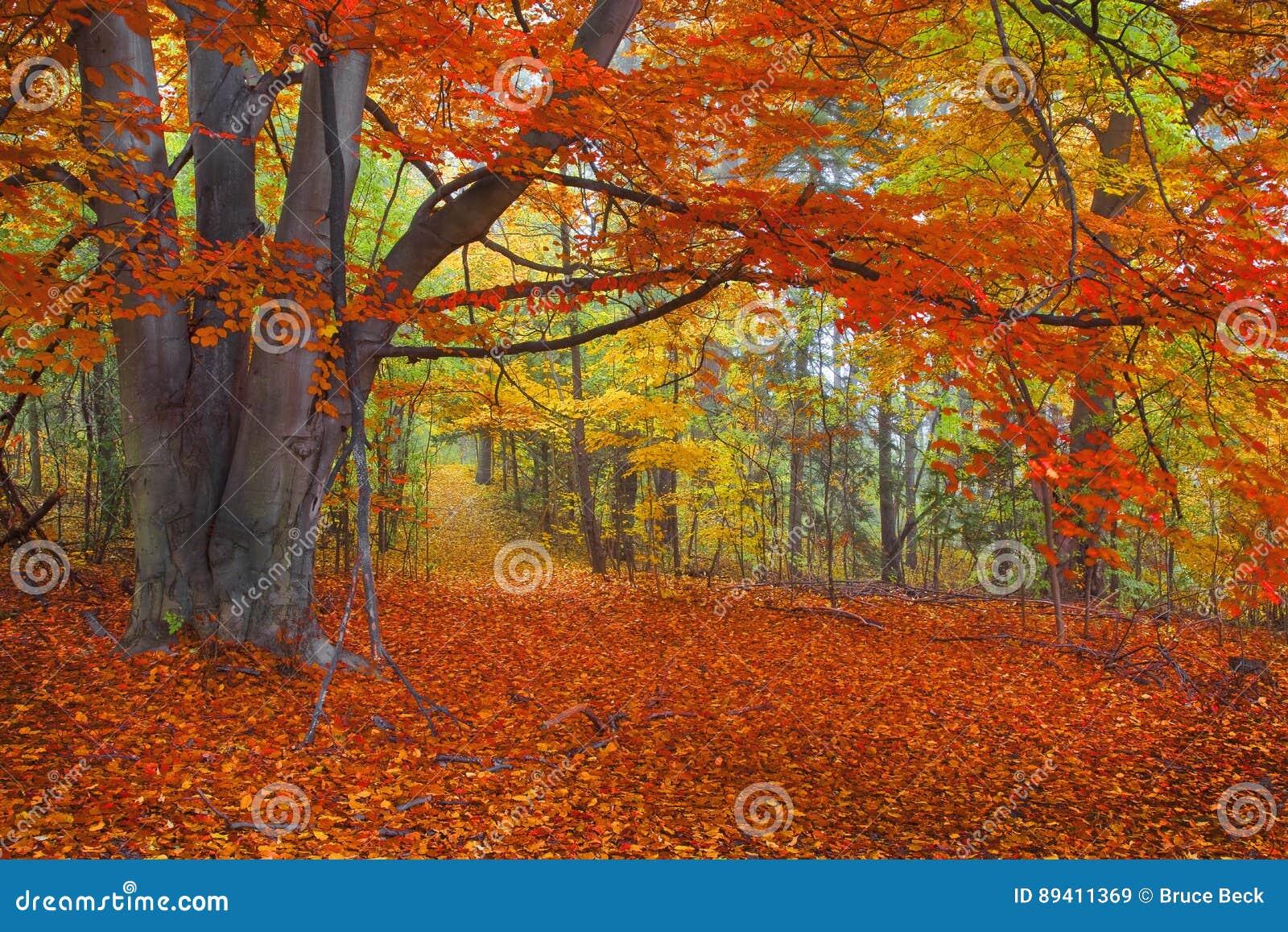 Autumn Colors brillante, trayectoria en el bosque