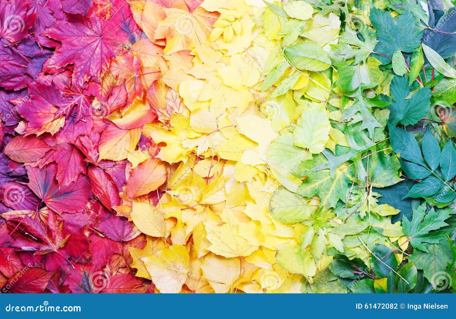Nature Color Palette Autumn Leaves