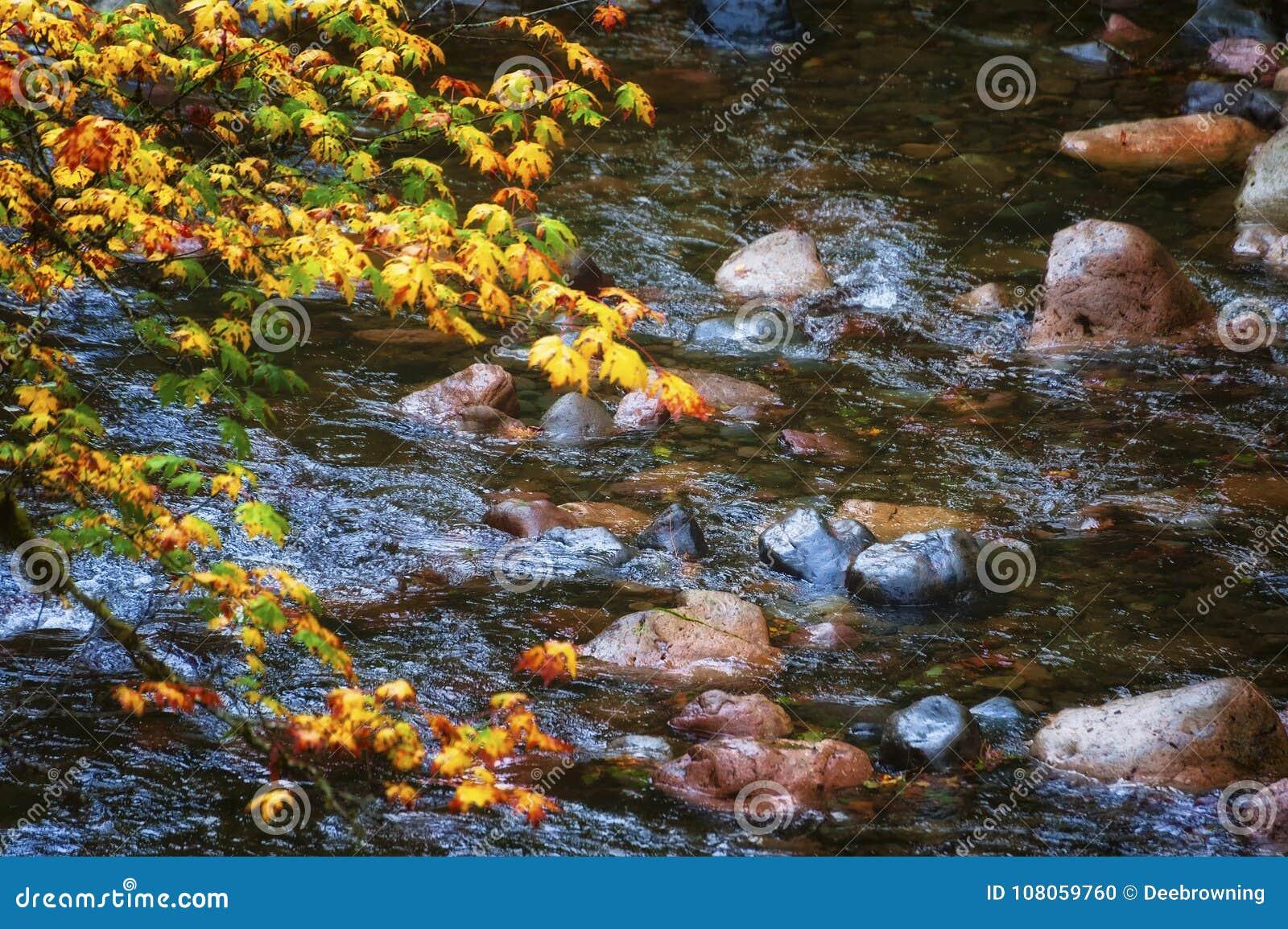Autumn Colors sur le chemin détourné scénique de passage de passage-Santiam de McKenzie