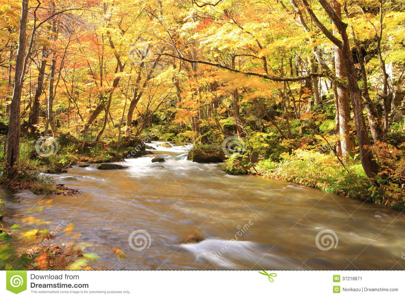 Autumn Colors von Oirase-Strom