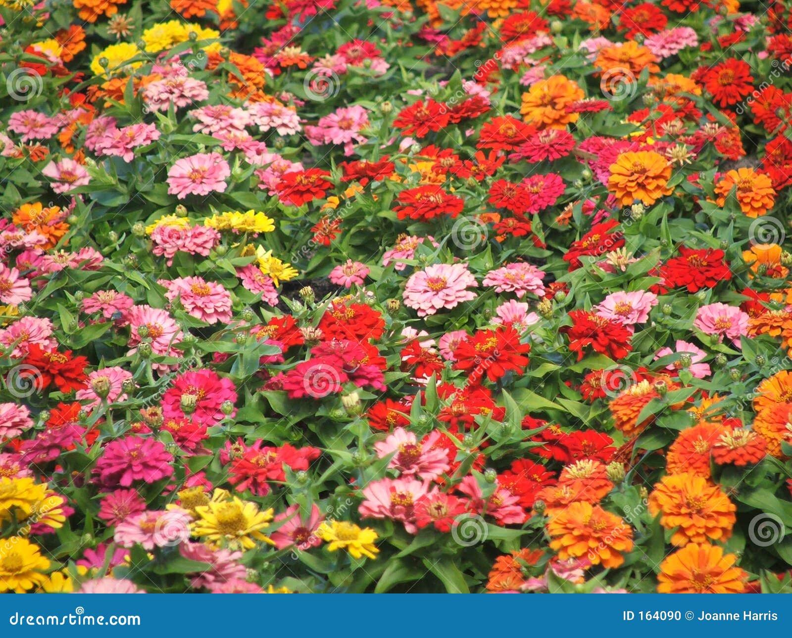 Autumn coloured little flowers