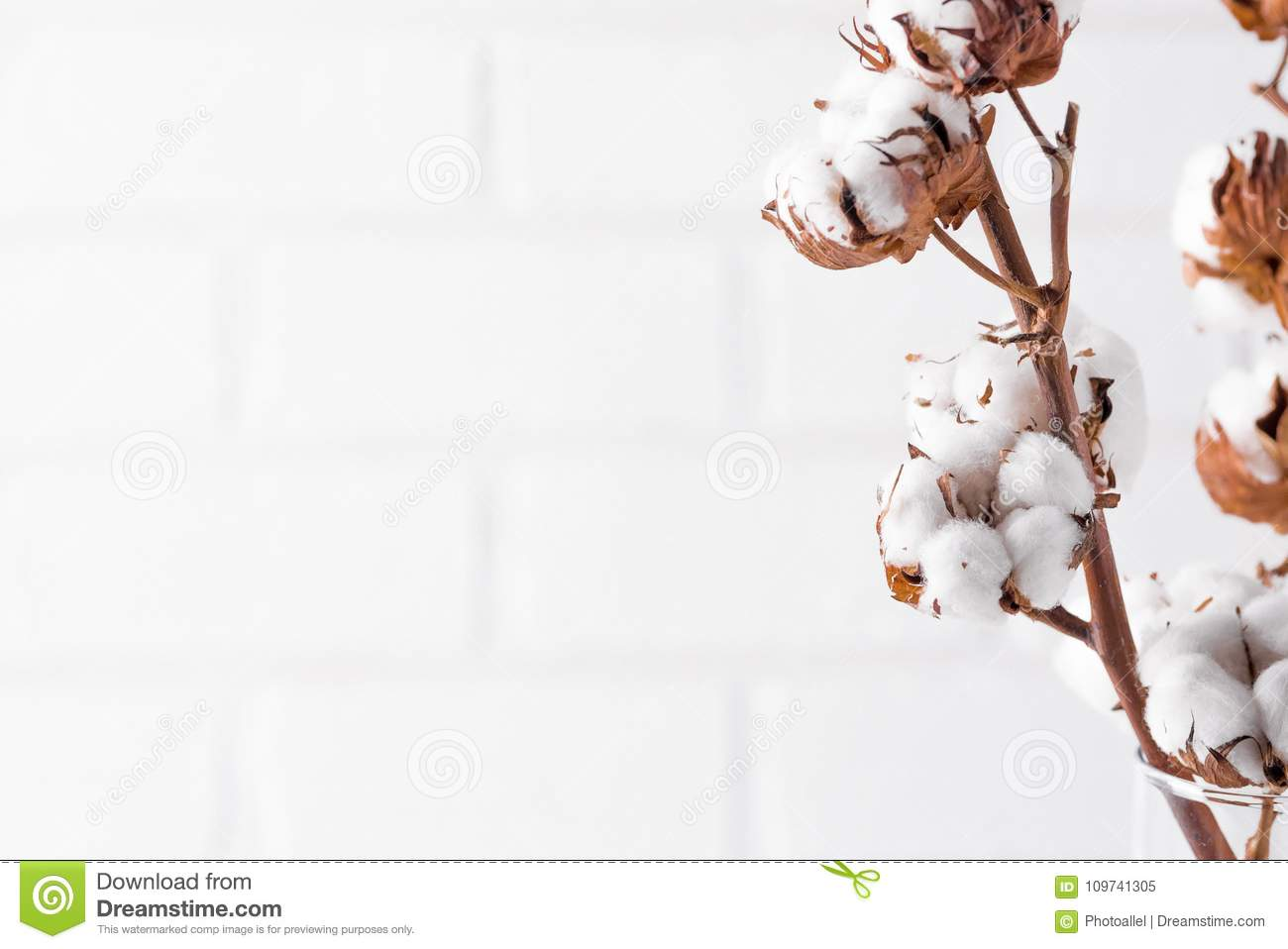Autumn Composition Dried White Fluffy Cotton Flowers On White Wood