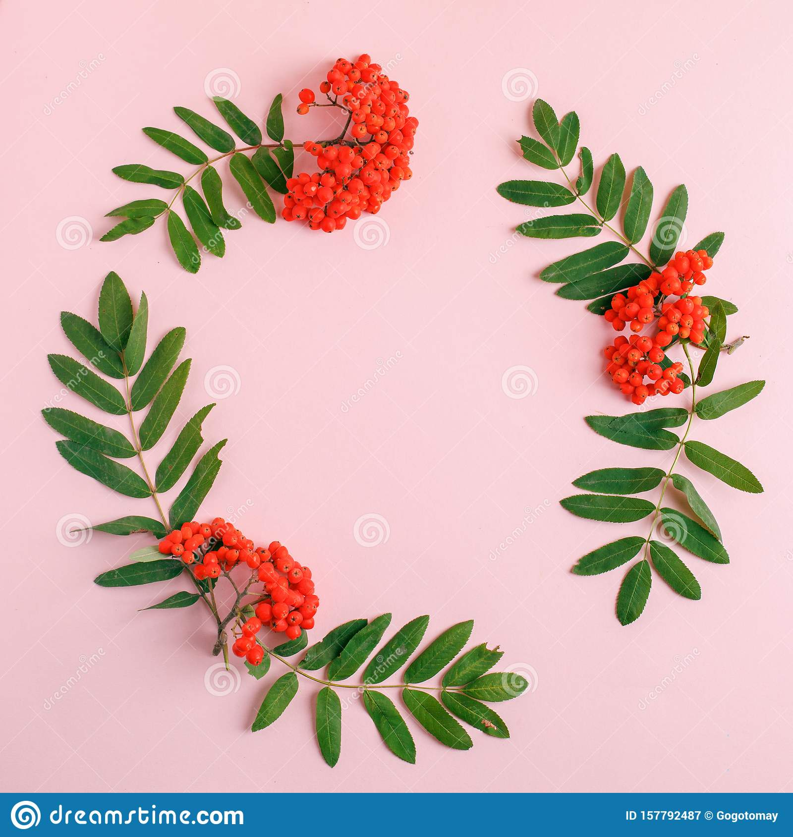 Autumn composition. Frame of leaves, rowan berries on a pink background. Fall background. Top view, copy space