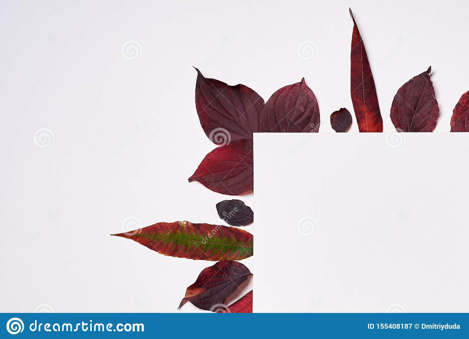 Autumn composition. Frame made of blank paper and leaves on white background. Fall concept. Autumn thanksgiving texture. Flat lay.