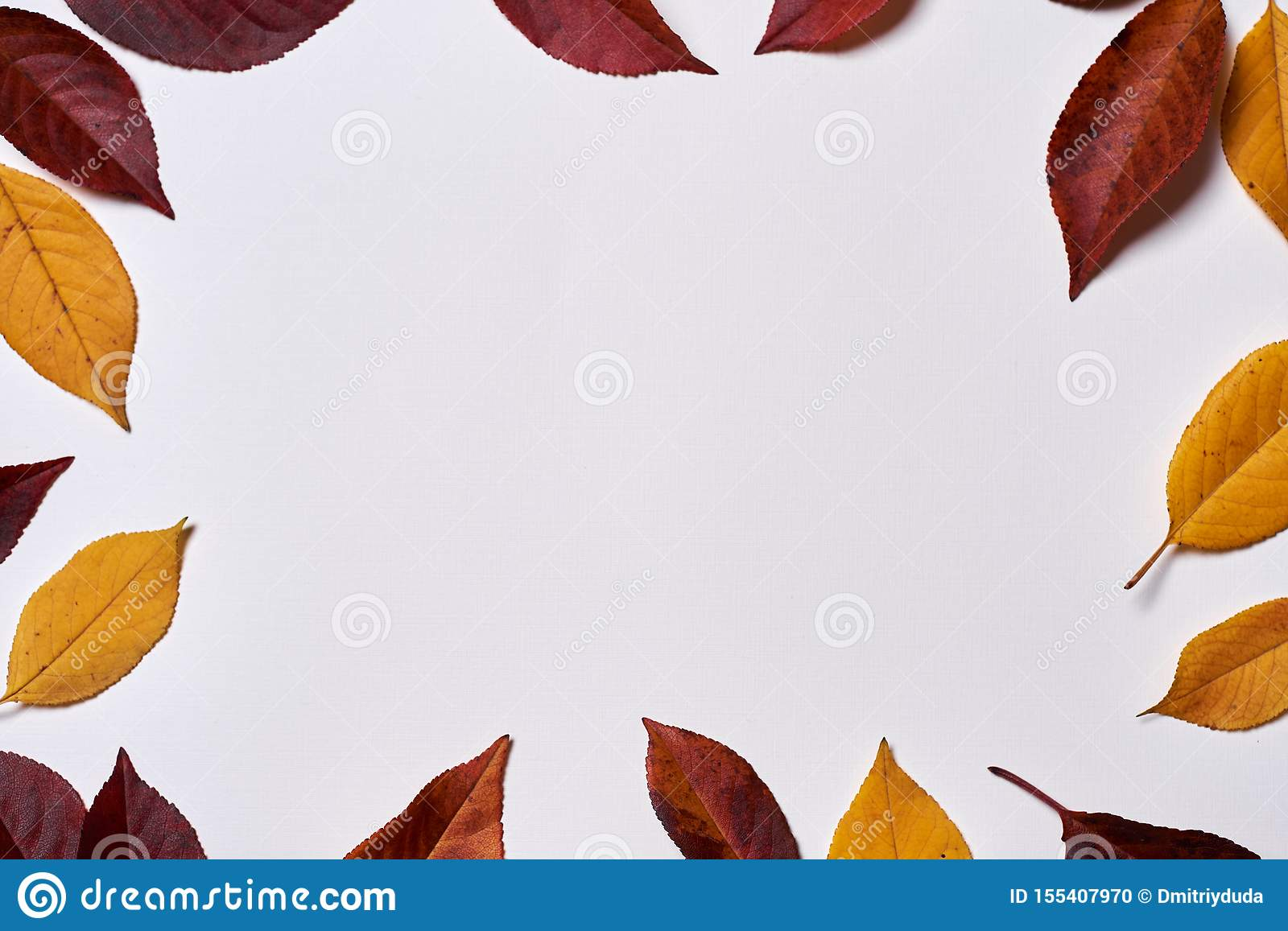 Autumn composition. Frame made of yellow and red leaves on white background. Fall concept. Autumn thanksgiving texture. Flat lay.