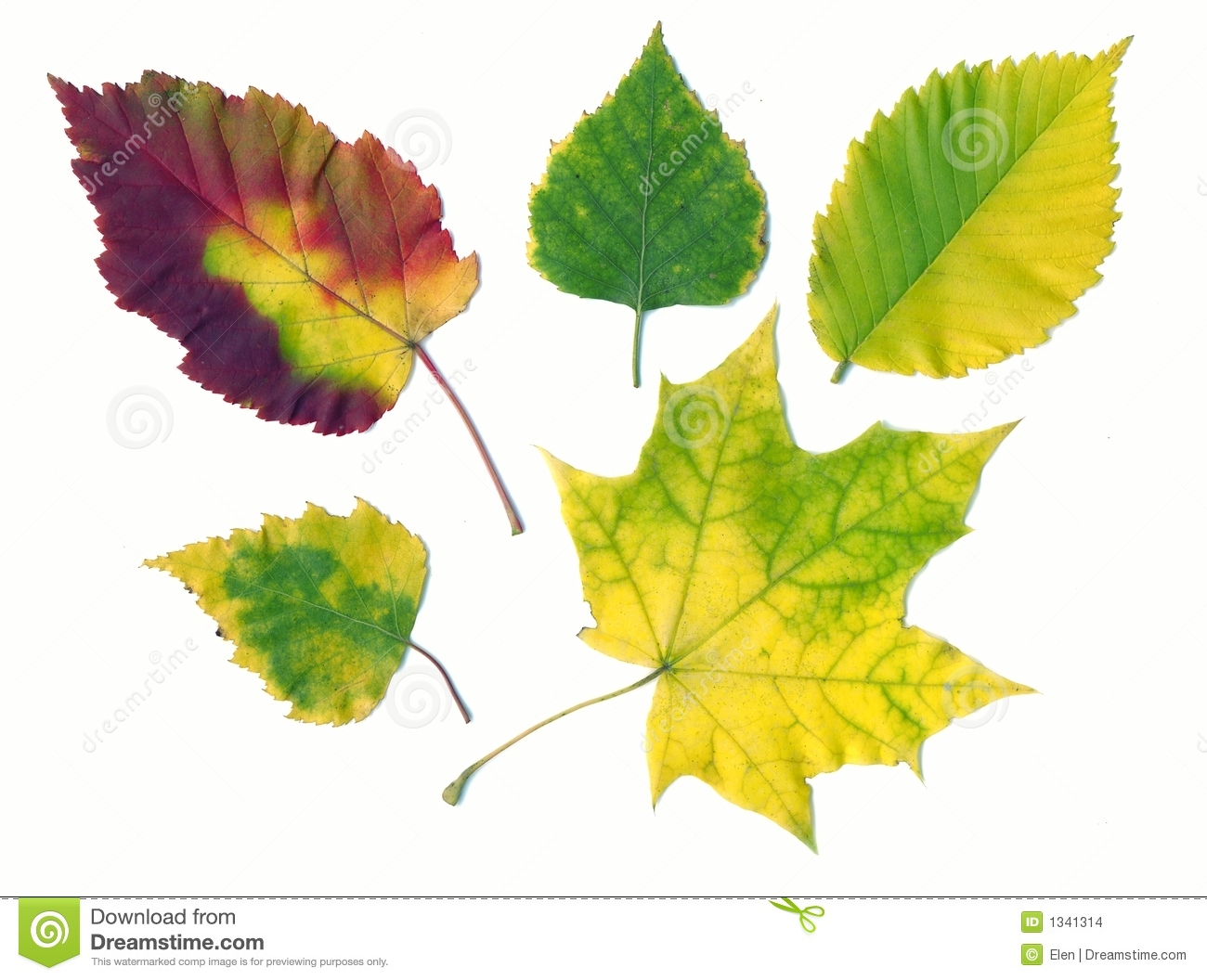 Autumn Different Leaves Stock Images Image 1341314