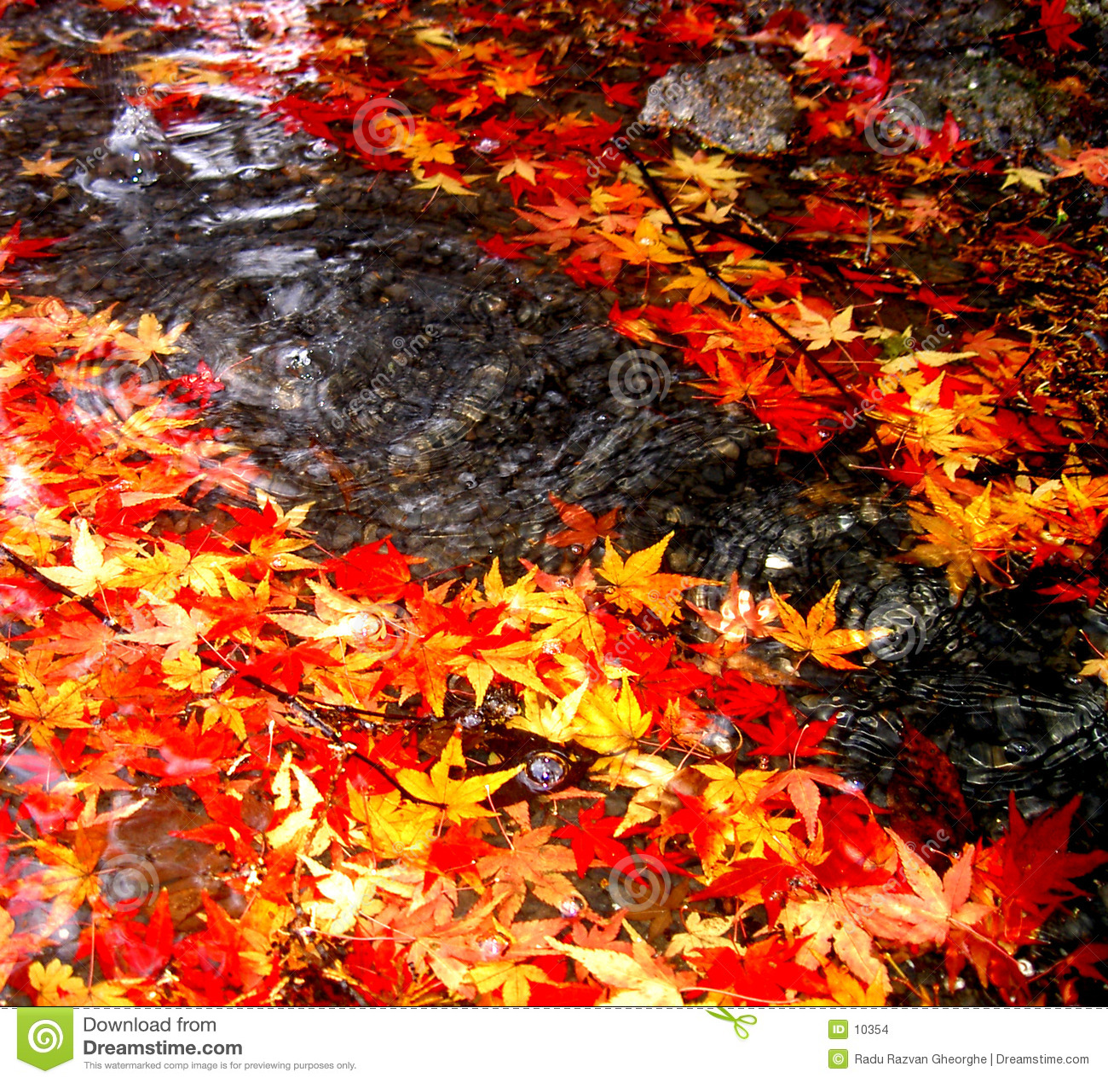 Autumn dropping