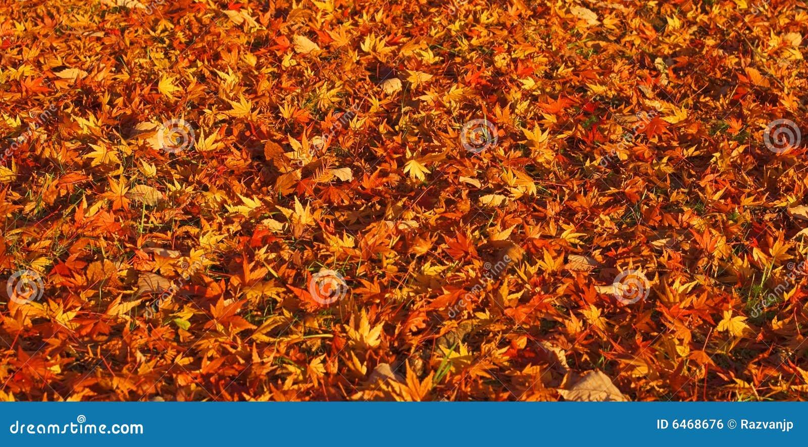 Autumn dywan