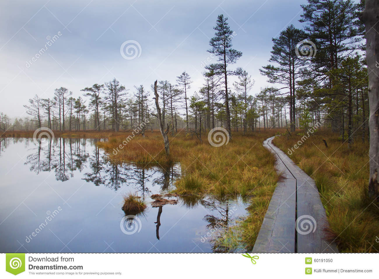 Autumn in Estonian bog.