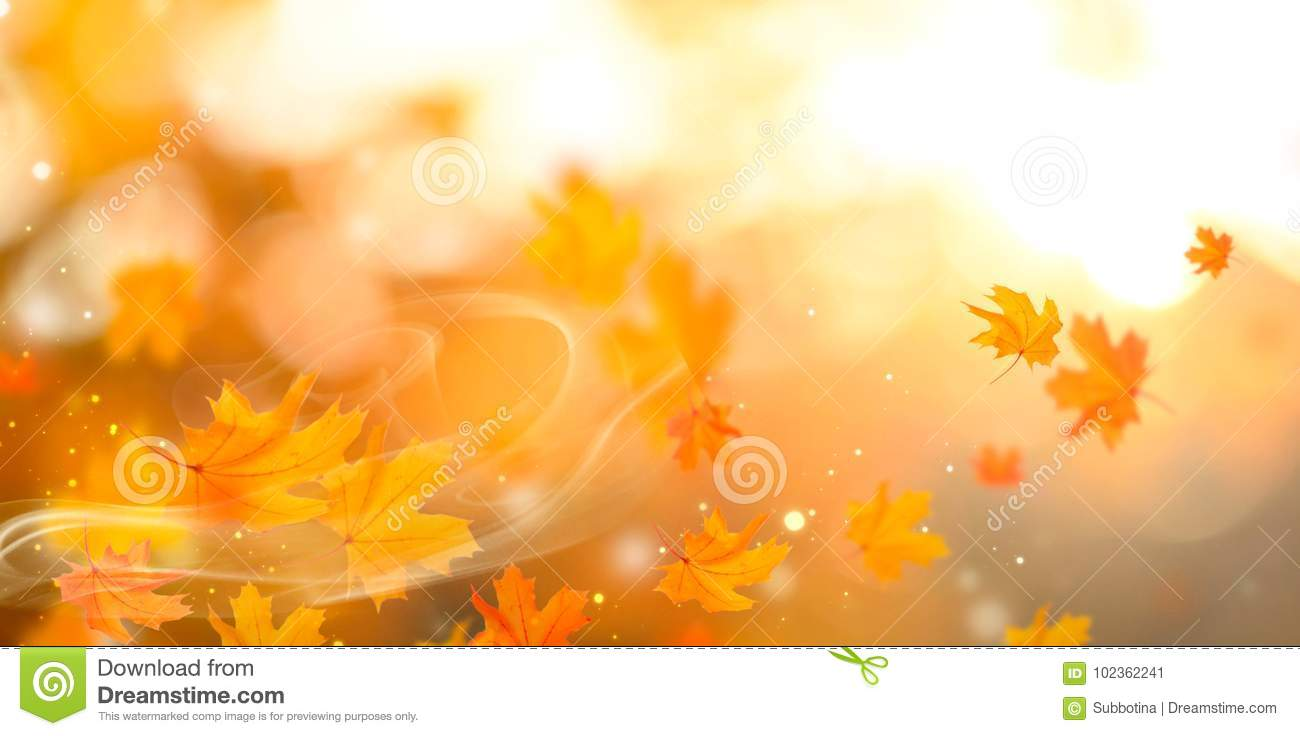 Autumn. Fall abstract autumnal background with colorful leaves