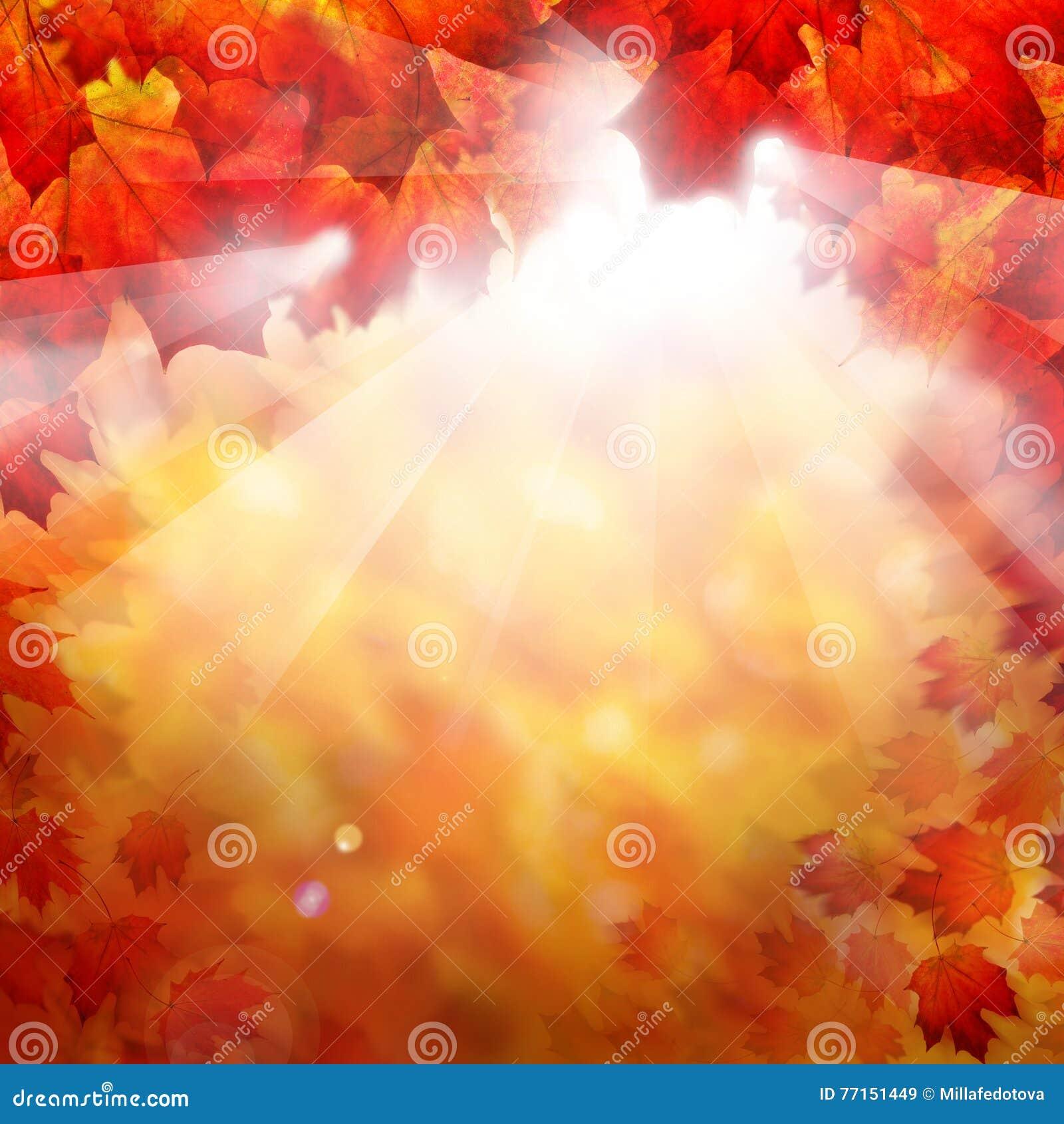 Autumn Fall Background avec des feuilles d érable rouge