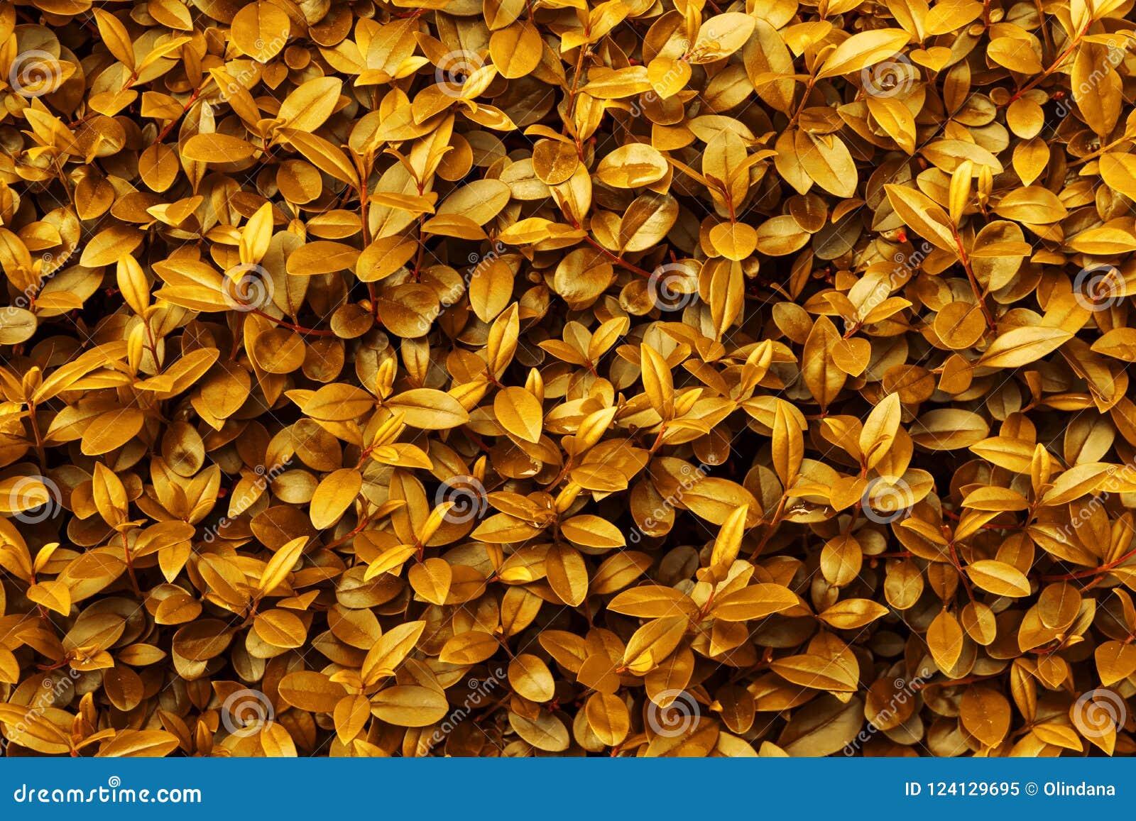 Autumn fall background yellow orange golden foliage pattern. Leaf texture vibrant vivid warm color palette