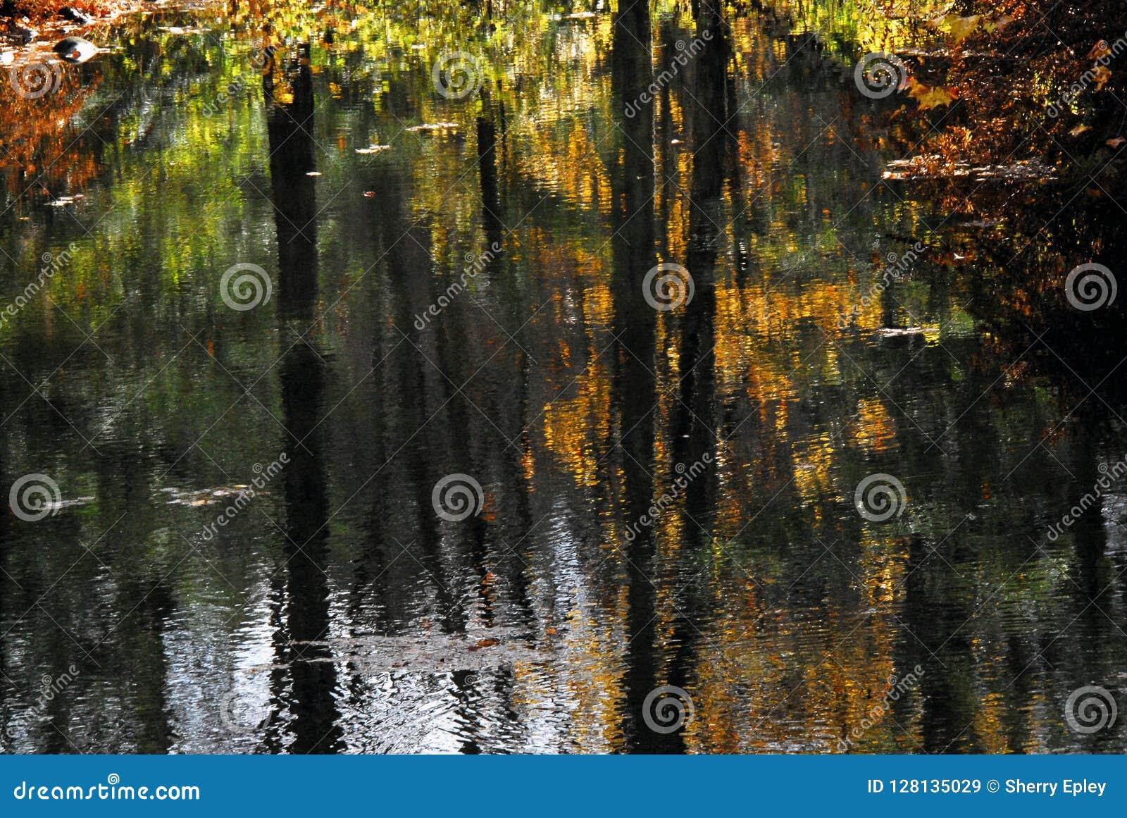 AUTUMN-FALL- belle réflexion de couleurs d automne