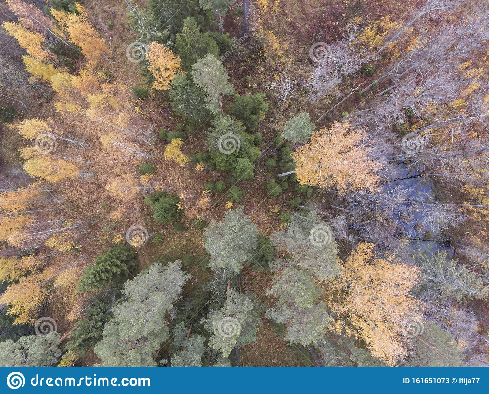 Amazing Autumn Mood Forest Top Down View From Drone For Desktop Wallpaper Stock Image Image Of Forest Drone 161651073
