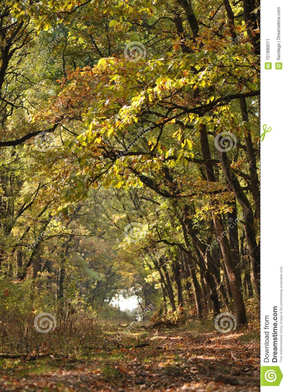 Autumn fall forest stock image. Image of garden, park - 101890011