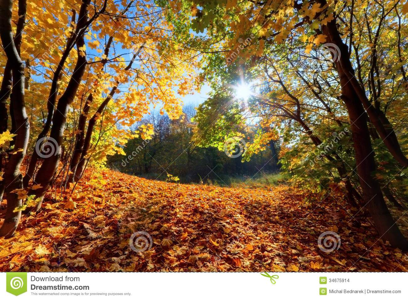 Fall Forest Landscape Stock Image Image