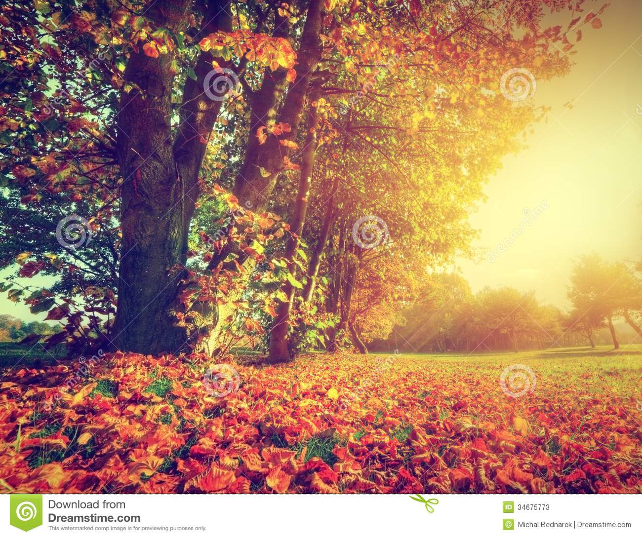 Autumn Fall Landscape In Park Stock Photos Image