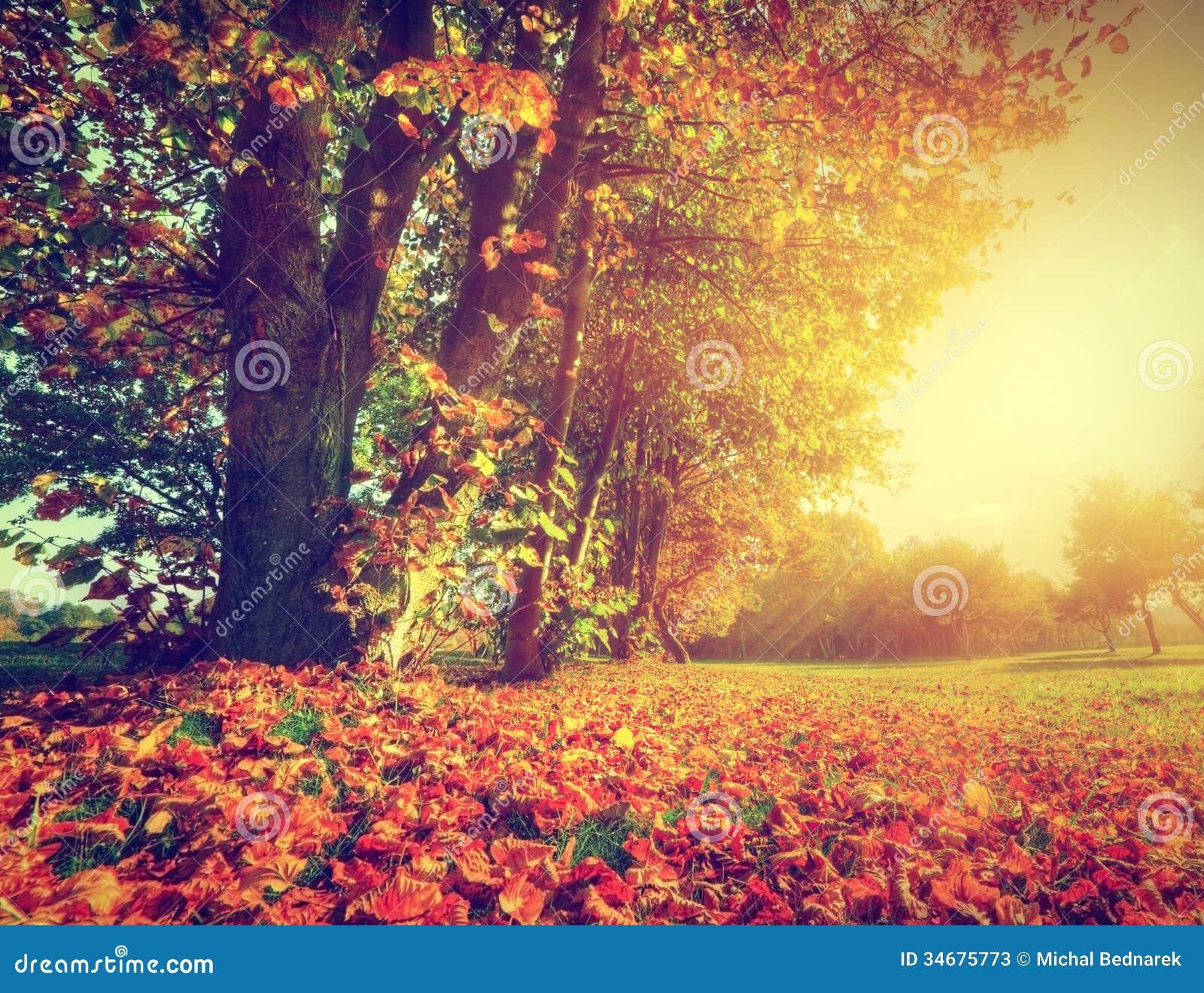 Fall Landscaping Garden Design Garden Design With Fall Landscape In Ottawa Stock