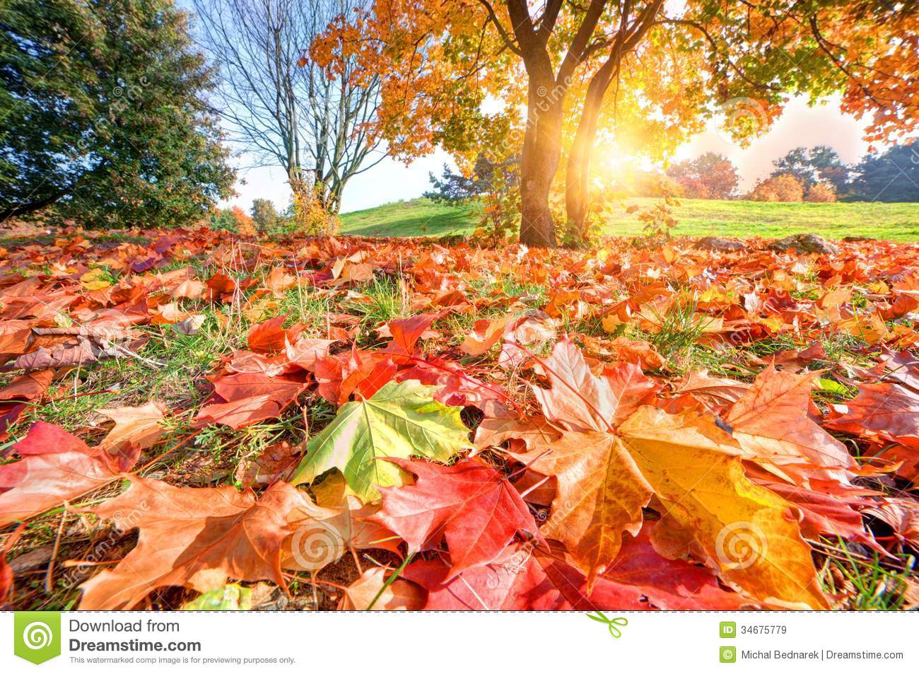 Autumn Fall Landscape In Park Royalty Free Stock Images Image