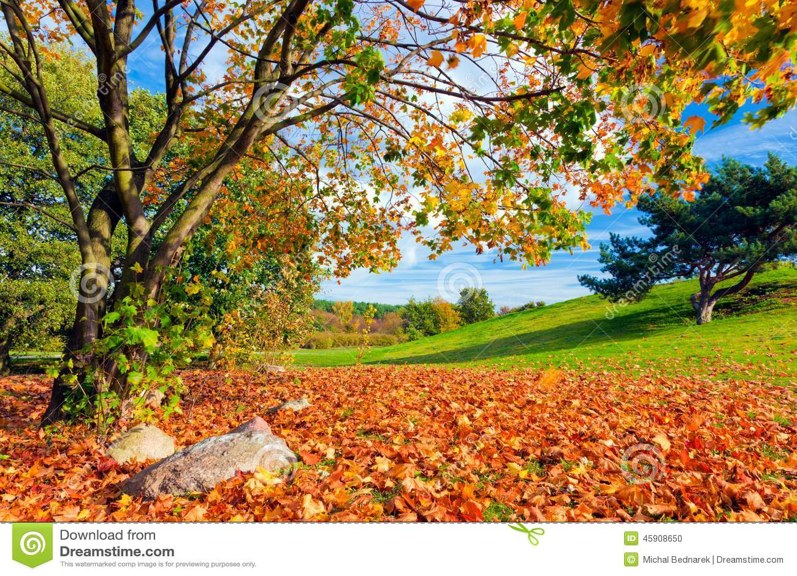 autumn fall tree backgrounds - photo #7