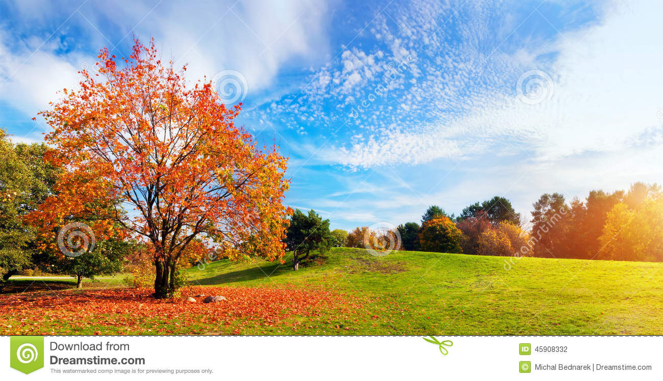 Autumn fall landscape tree with colorful leaves stock for Landscape trees