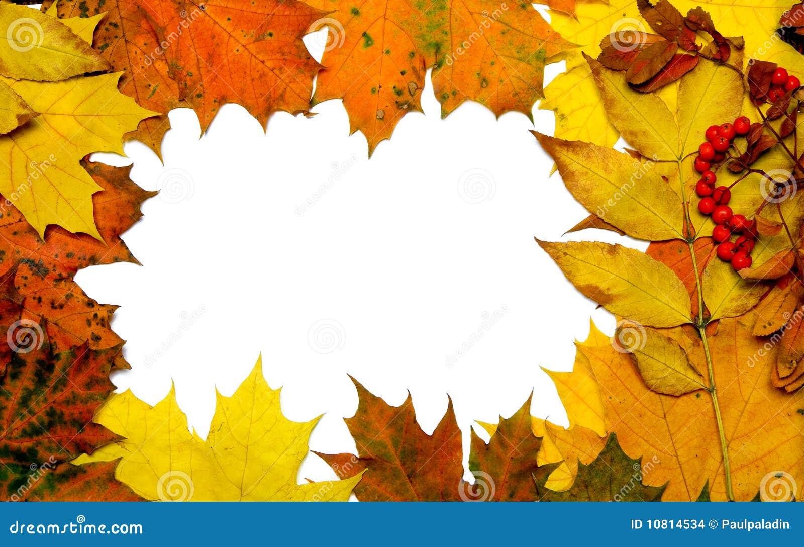 Рамки для фото из листьев своими руками