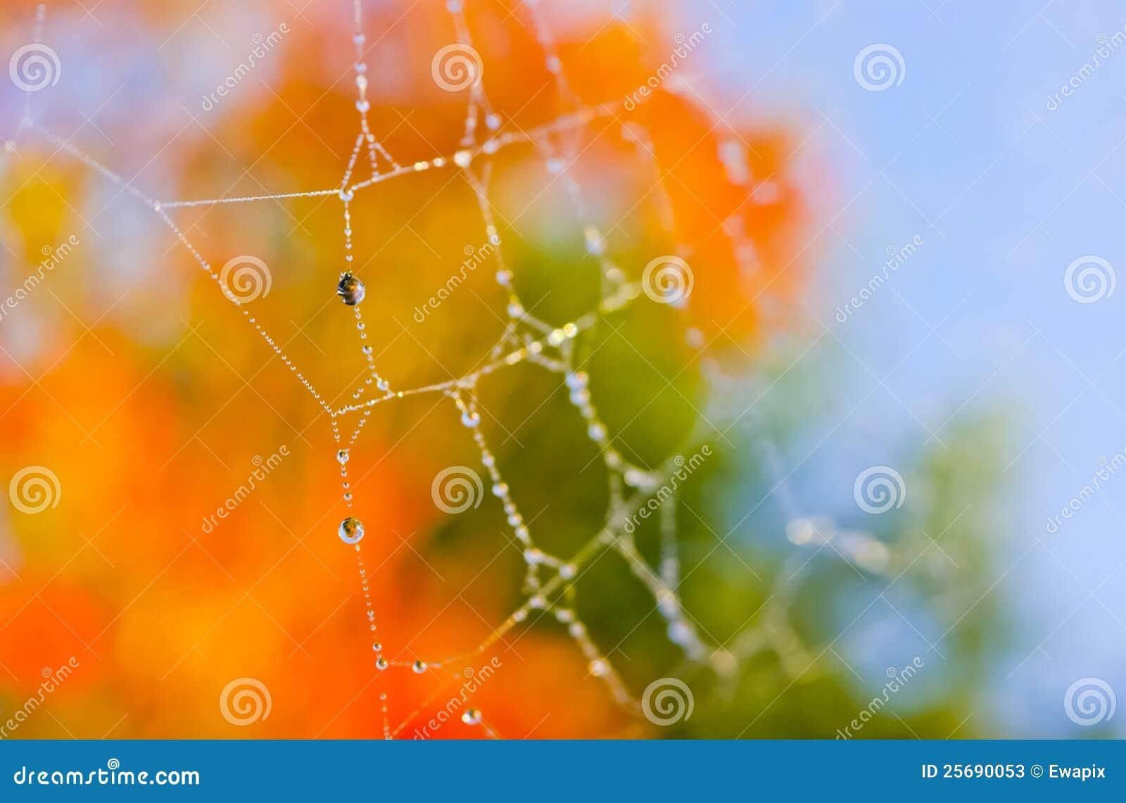 Autumn Fall Orange Spider Web Background Stock Image Image Of Vibrant Colorful 25690053